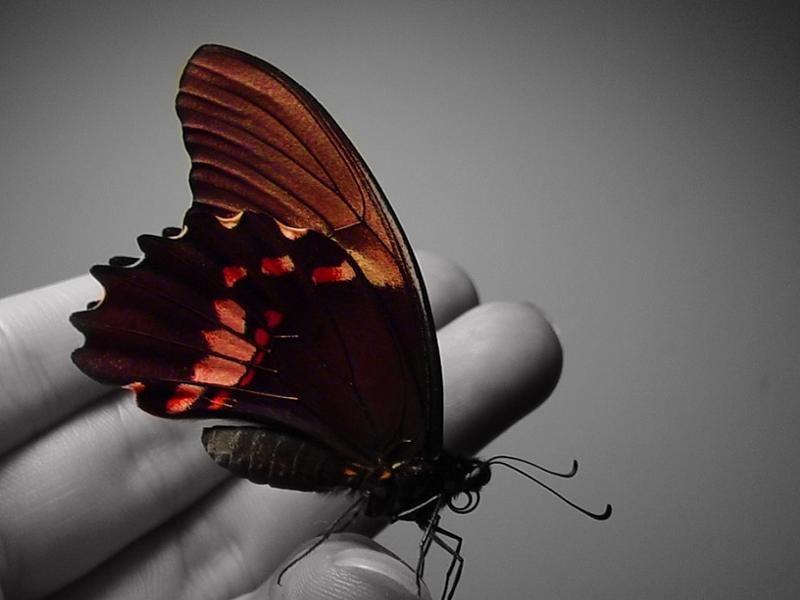 La parabole du papillon